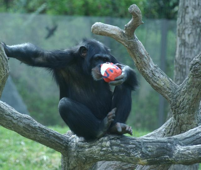 Can Zoo Animals Hunt For Easter Eggs