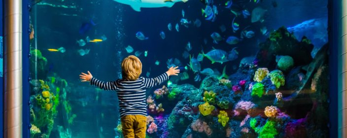 Sea Life Preise Tickets Infos Offnungszeiten Reiseuhu De