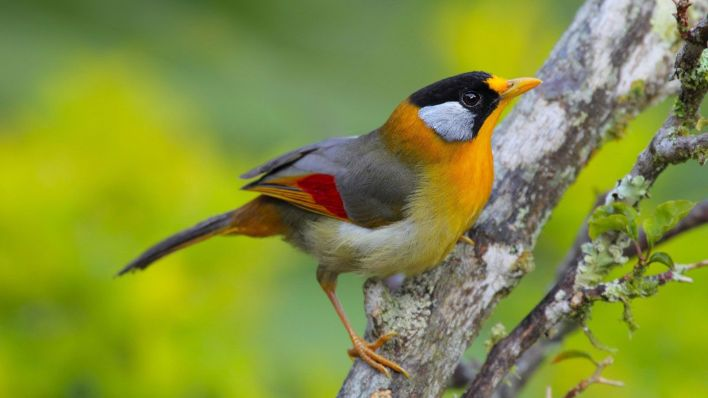 Private Fraser's Hill Bird-Watching & Sightseeing Tour