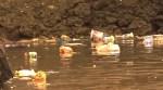 Sampah plastik mengambang di laut pesisir pantai Kasipute, Kecamatan Rumbia, Kabupaten Bombana, Rabu 19 Februari 2020. Foto: Hasrun/Mediakendari.com