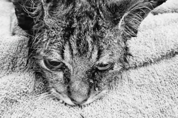 Любопытный кот засунул голову в банку, и очень зря. Впереди его ожидало незабываемое двухнедельное приключение