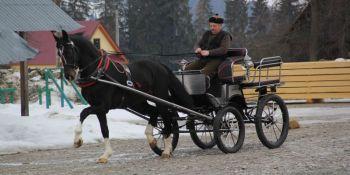 sztuka układania konia