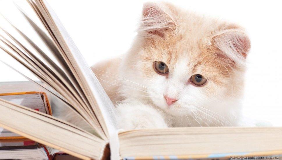 Книжки и кошки
