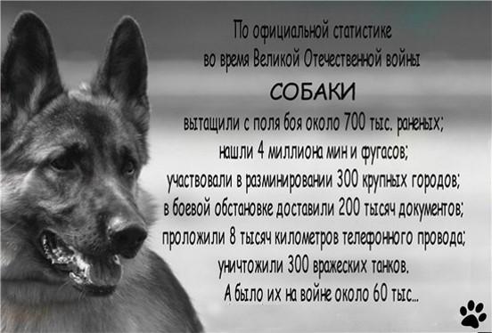 Собаки-сапёры