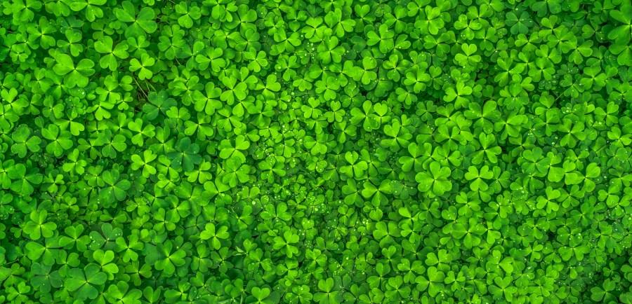 Irish Books for St. Patrick's Day