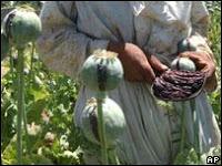 afghan opium production 'soars'