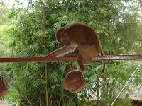 when primates attack: monkey kills abusive owner with coconut