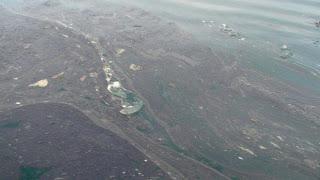 huge blob of arctic goo floats past arctic alaska communities
