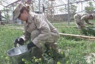 military wants a swine flu greenhouse