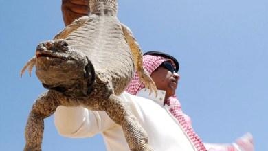 الضب على موائد رمضان في الدول الخليجية