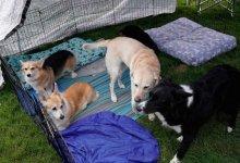 أمريكا تحظر استيراد الكلاب من 113 دولة من بينها مصر وروسيا