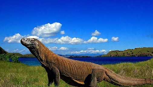 Tour Komodo Island