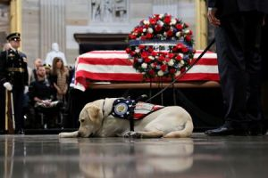 Sully, George H.W. Bush's dog, starts new job with wounded U.S. service members, veterans
