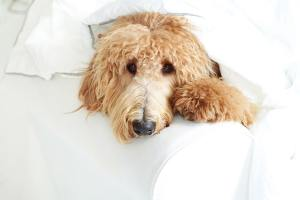Dealing With Doggy Anxiety: How to Calm Your Pup Naturally When They're Feeling Stressed Out