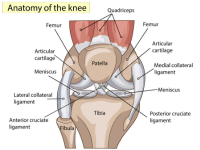 Common Knee Issues and What to Do About Them