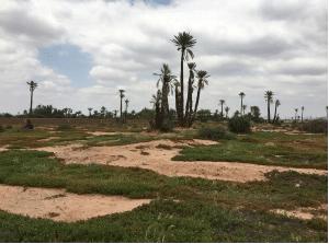 Achat d'un terrain au Maroc, comment faire le bon choix?