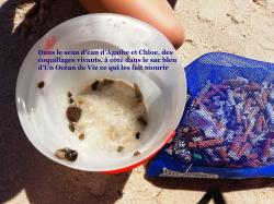 Dans le seau d'eau d'Agathe et Chloé, des coquillages vivants, à côté dans le sac bleu d'Un Océan de Vie ce qui les fait mourir.