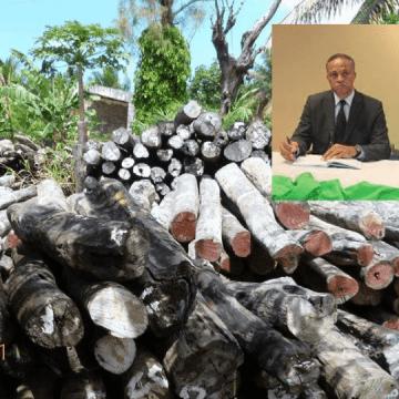 Gabon : Le gouvernement rejette le rapport de Environmental Investigation Agency