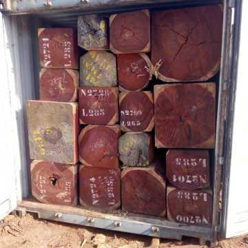 Trafic de bois: des hautes autorités dans le viseur du MAMBA !