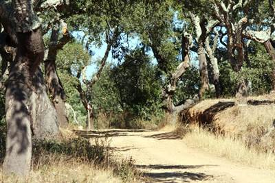 Beautiful 14 Hectare Cork Forest with Distant Sea Views