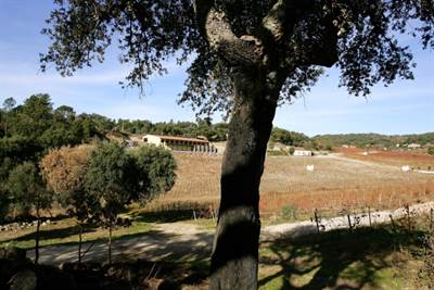 Premium Vineyard with Modern Winery and 4 Homes for Renovation