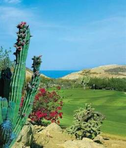 Palmilla Golf Lot Phase 1 Oasis  SAN JOSE DEL CABO  Baja California     1 of 8  Palmilla Golf