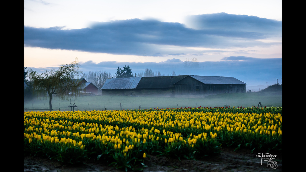 PHOTOS: Skagit Valley in bloom, spring 2016 - (3/13)