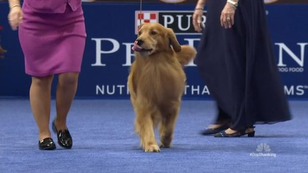 2020 American Rescue Dog Show.American Rescue Dog Show The American Dog Show