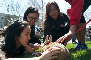 """Jane Rhy, second from right, is one of many students who interacted with Burrito, a rabbit, at Stony Brook University's Earthstock festival. """"It's the first time I've touched a bunny,"""" she said. Photo by Trevor Christian. (April 25, 2014)"""