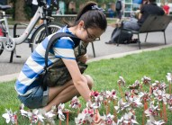 Stony Brook, NY-- Tianjiao Tang, a graduate student majoring in computer engineering at Stony Brook University, places a pinwheel in the ground in memory of 9/11. By Ashley Maisano. (Blue)