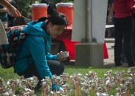 A student places a pinewheel in rememberance of those lost in the September 11 attacks.