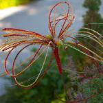 wire-sculpture-photograph