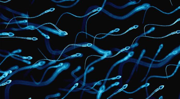 sperm DNA of infertile men