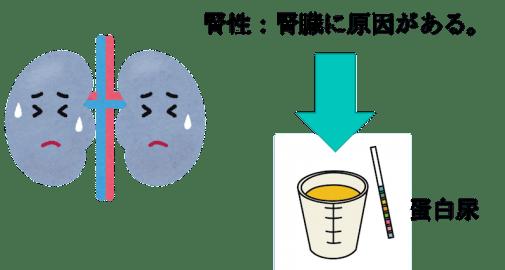 Renal proteinuria