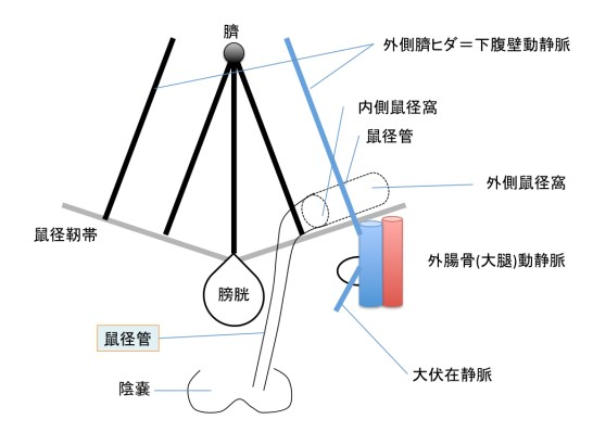 inguinal-canal-figure-001