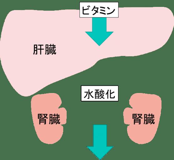 liver 5