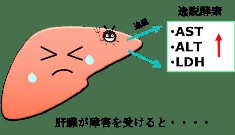 liver function test figure1