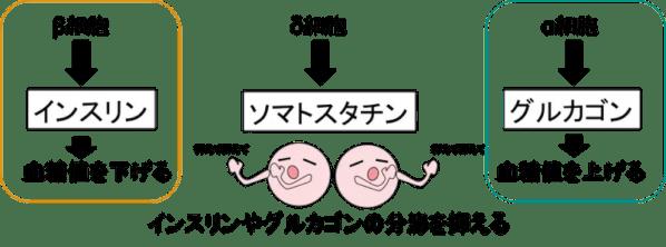 role of pancreas6