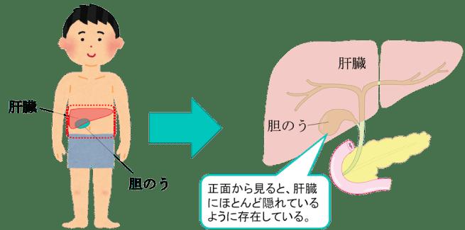 location of gallbladder1