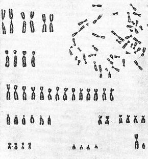 viermi plate în cromozomii umani