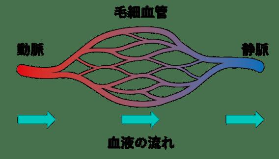 正常の動脈、毛細血管、静脈の関係のイラスト