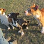 Pearl, Molly & Skye