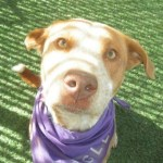Aveda Has Been Adopted!