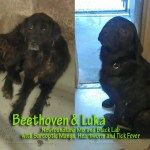 Beethoven & Luka