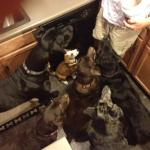 Foster pack!