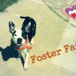 Petunia, foster fail!