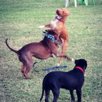 Denny and Duggy play, Leeta watches