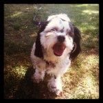 Molly, happy!