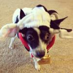Oreo is ready for Halloween