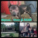Bijoux's new family!